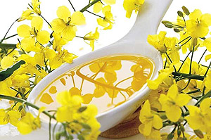 canola oil made by hand crank canola oil press